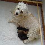 gerties puppies 008.jpg